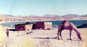 NaamaBay1975