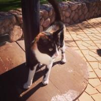 Lost my cat