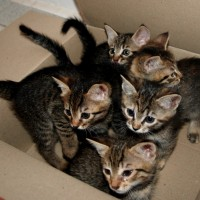 5 lovely kittens need a homee