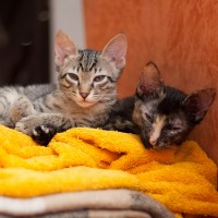 2 pretty kittens (2 girls) looking for a home