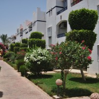 For rent in Riviera Sharm