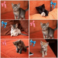 6 wonderful kittens 3 boy, 3 girl  need a homee