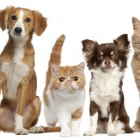 New Online Pet Shop In Sharm