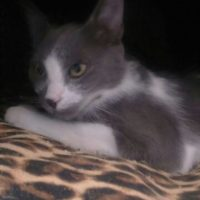Loving home needed for little Smudge