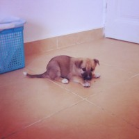 Beautiful puppy needs a good home