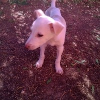 Puppy looking for a forever loving home