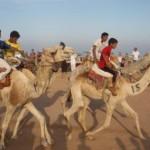 camel_race